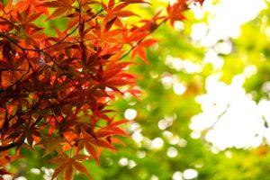 秋はチャレンジの季節