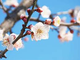 春に訪れを感じる